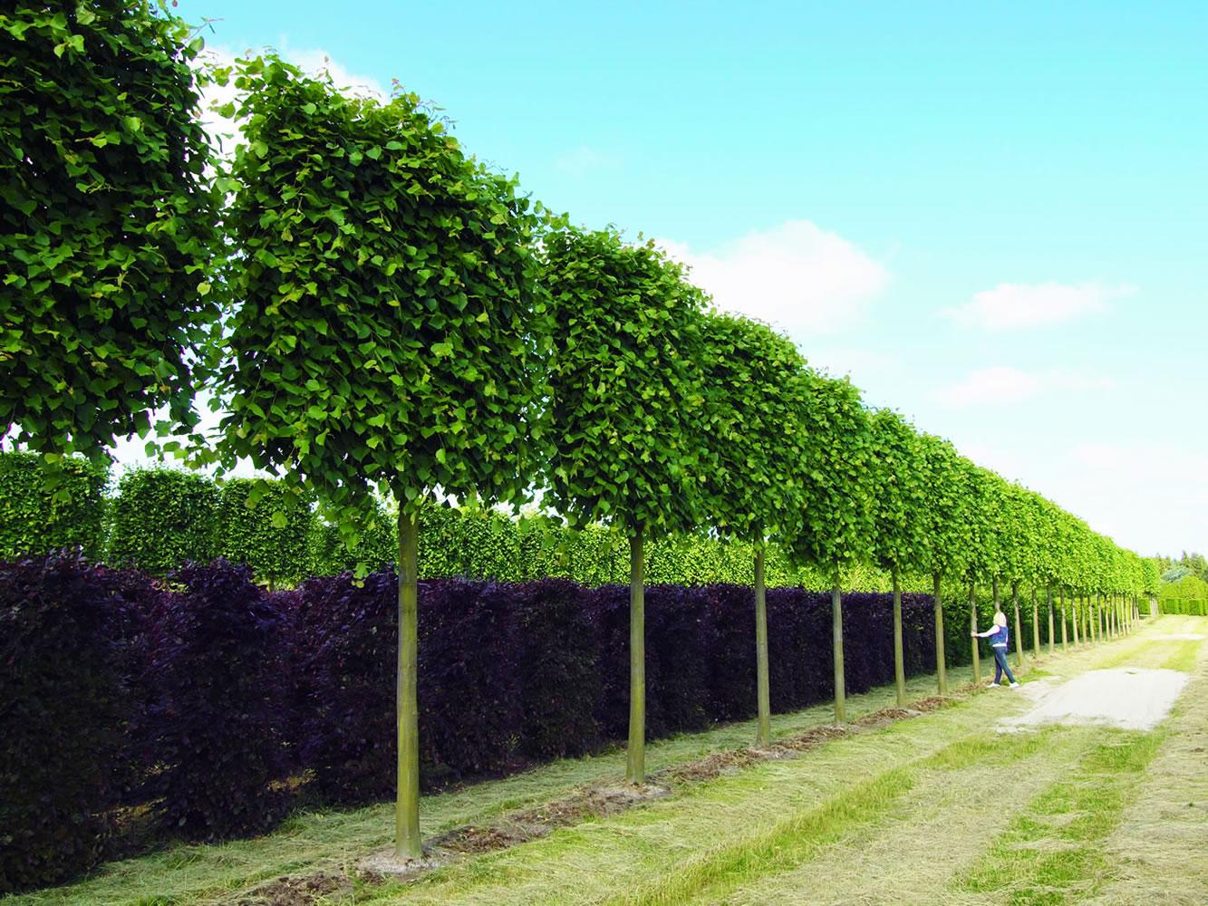 Formgeh lze vf pflanzen en - Gartenzaun dortmund ...